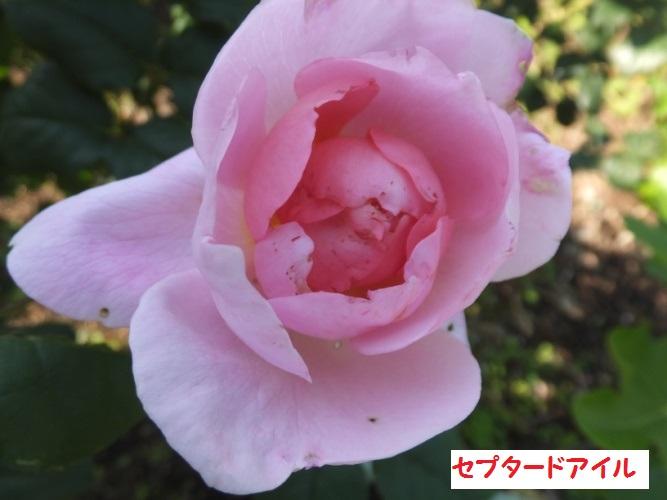 DSCF1017_1.jpg