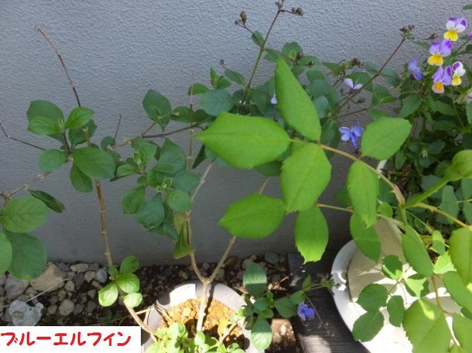 DSCF1060_1.jpg