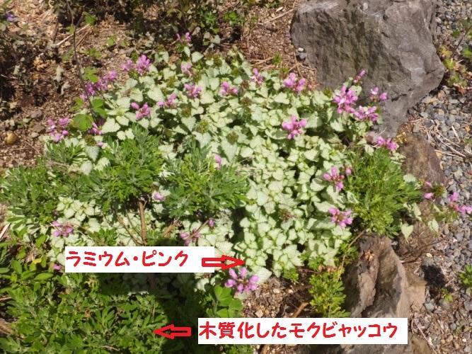 DSCF1062_1.jpg