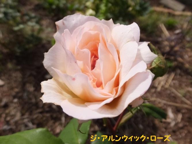 DSCF1094_1.jpg