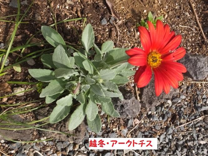 DSCF1104_1.jpg
