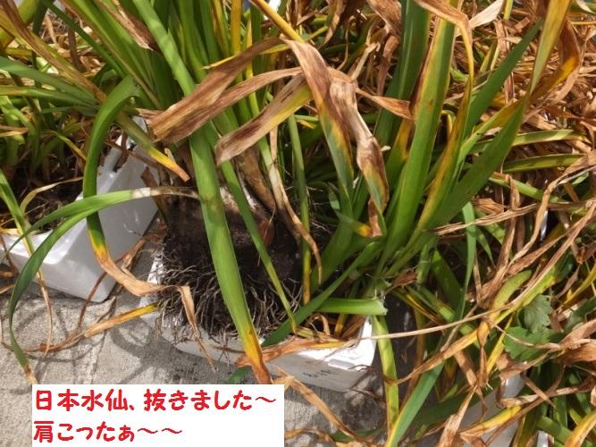 DSCF1114_1.jpg