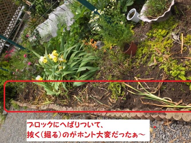 DSCF1115_1.jpg