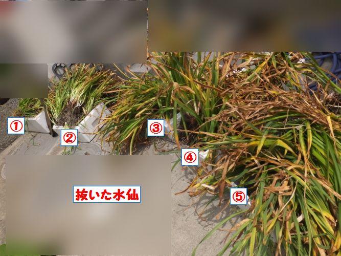DSCF1116_1.jpg