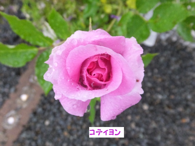 DSCF1124_1_20180507134506891.jpg