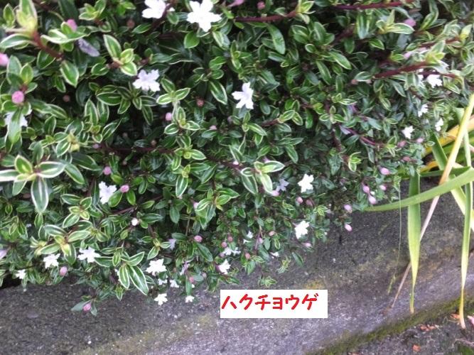 DSCF1125_1.jpg