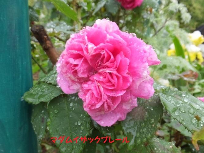 DSCF1157_1.jpg