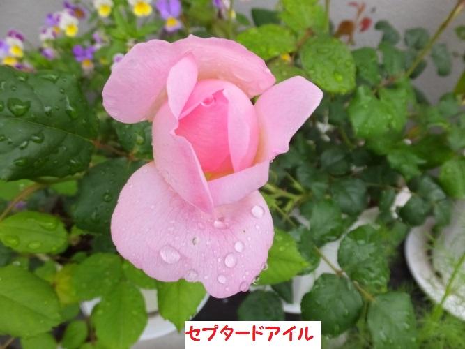 DSCF1180_1_2018050917161607f.jpg