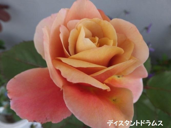 DSCF1438_1.jpg