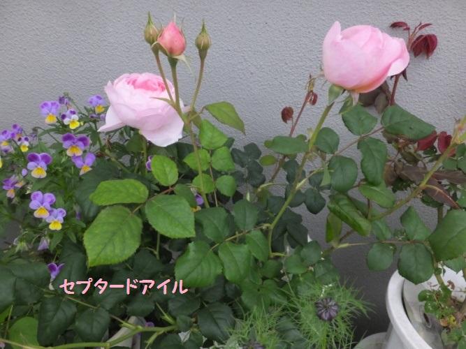 DSCF1498_1_2018051319331685d.jpg