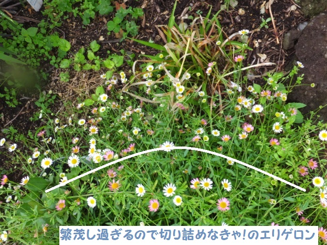 DSCF2122_1.jpg