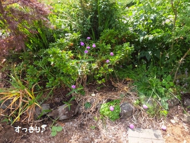 DSCF2146_1.jpg