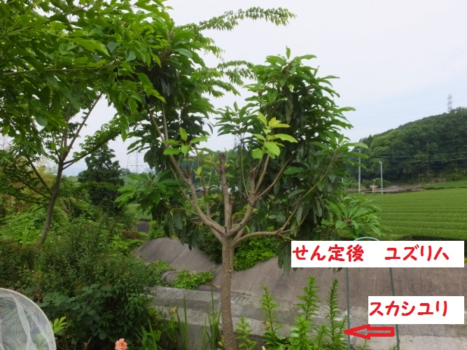 DSCF2192_1.jpg