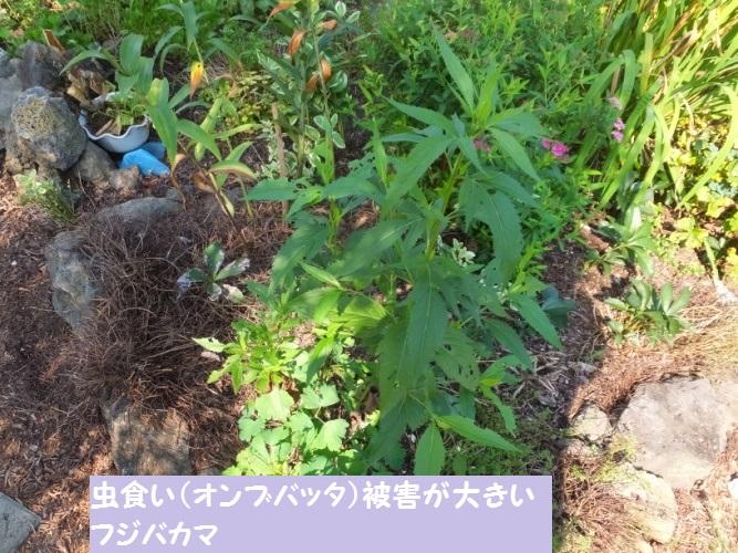 DSCF3242_1.jpg