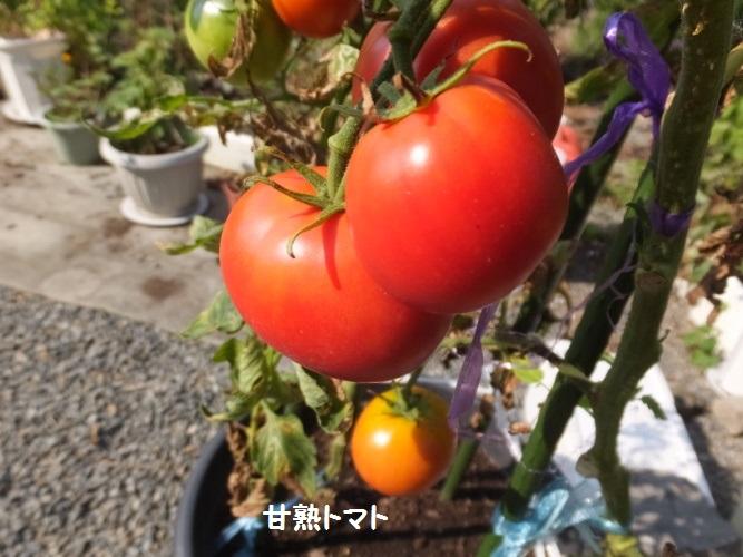 DSCF3246_1.jpg
