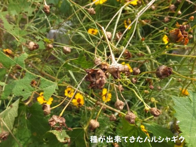 DSCF3360_1.jpg