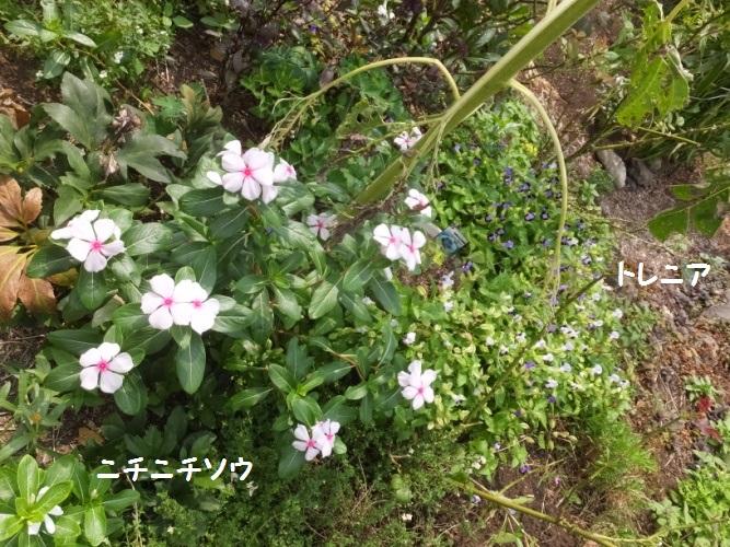 DSCF3361_1.jpg