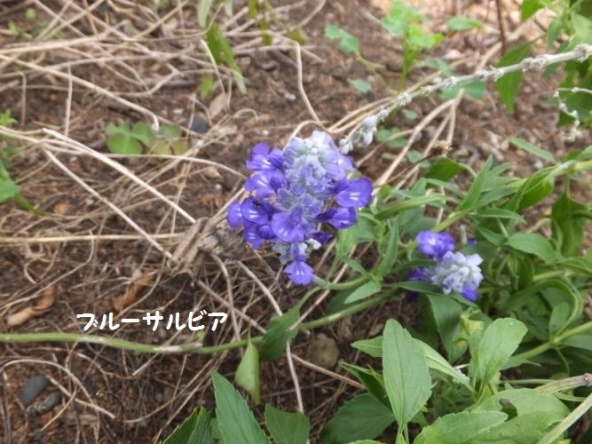 DSCF3367_1.jpg