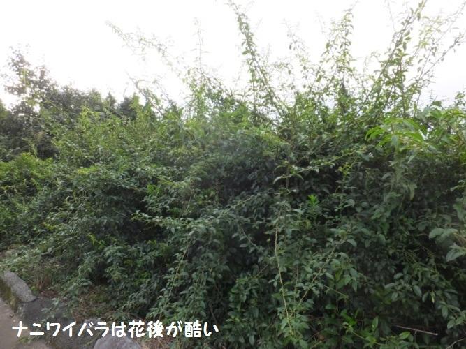 DSCF3484_1.jpg