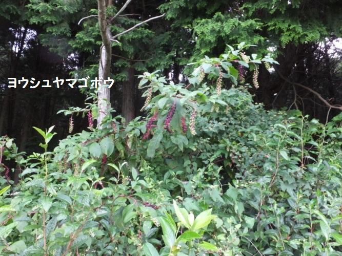 DSCF3485_1.jpg
