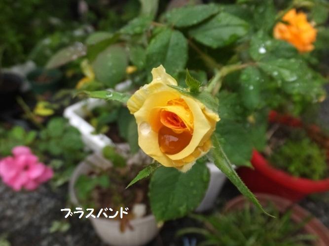 DSCF3573_1.jpg