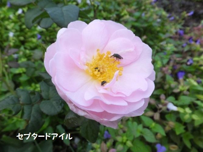 DSCF3642_1.jpg
