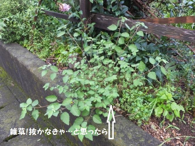DSCF3648_1.jpg