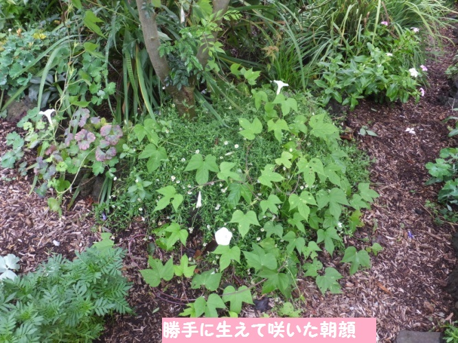 DSCF3659_1.jpg