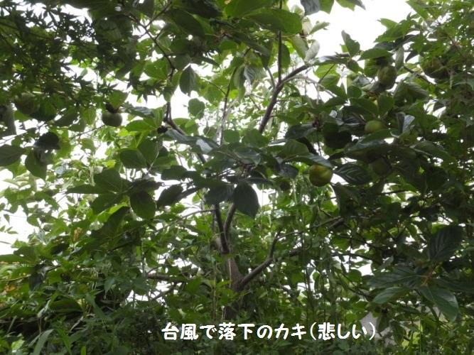 DSCF3710_1.jpg