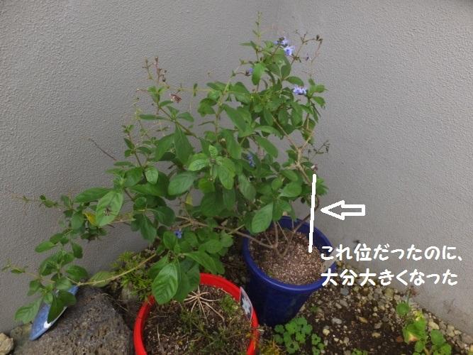 DSCF3883_1.jpg