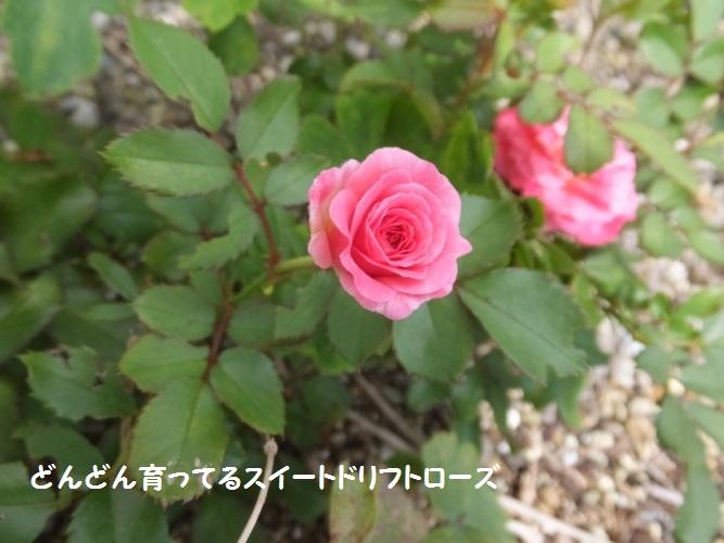 DSCF4012_1.jpg