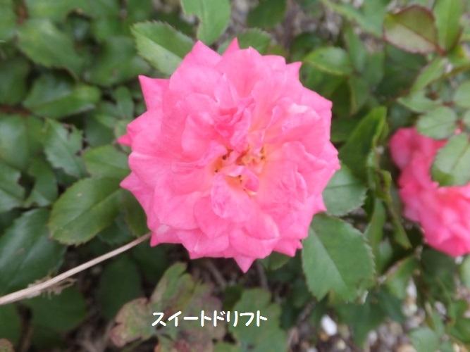 DSCF4059_1.jpg