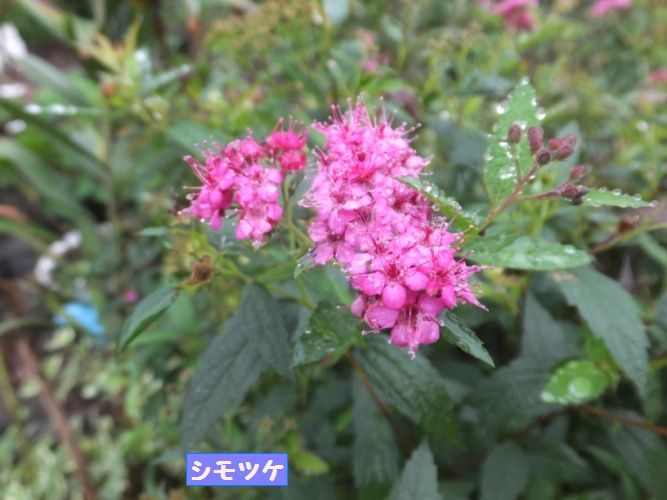 DSCF4075_1.jpg