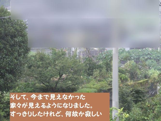 DSCF4103_1.jpg