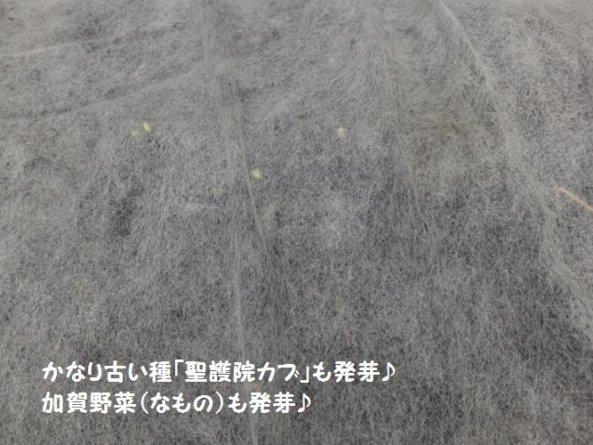 DSCF4123_1.jpg