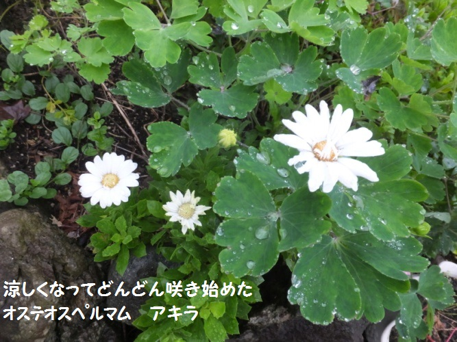 DSCF4124_1.jpg