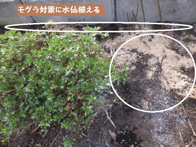 DSCF4194_1.jpg
