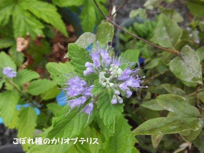 DSCF4219_1.jpg