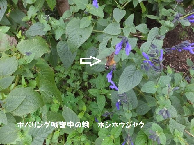 DSCF4222_1.jpg