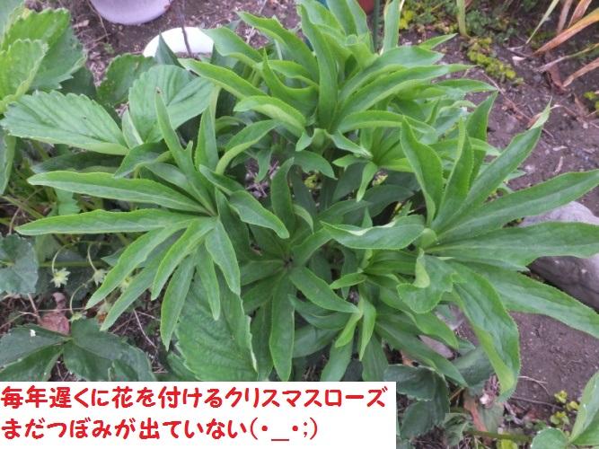 DSCF9034_1.jpg