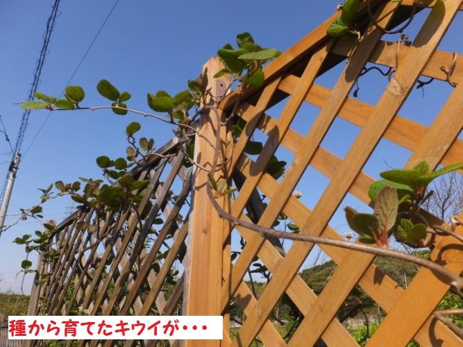 DSCF9195_1.jpg