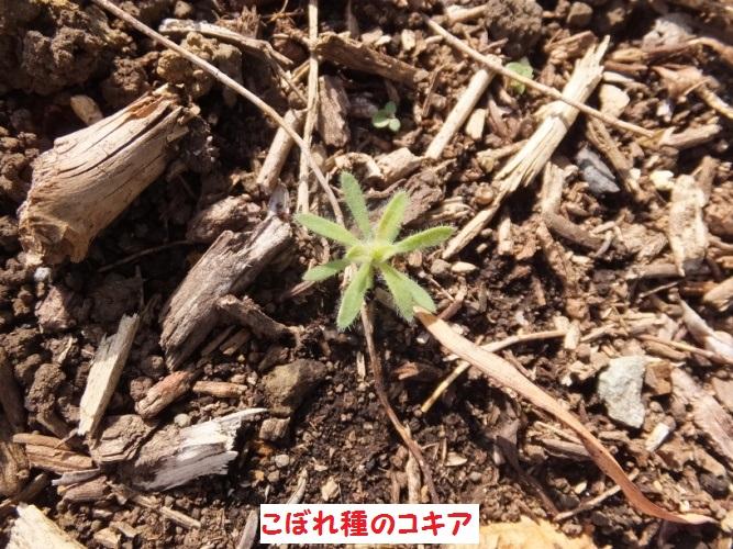 DSCF9205_1.jpg