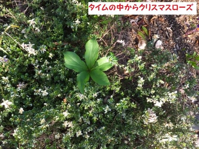 DSCF9210_1.jpg