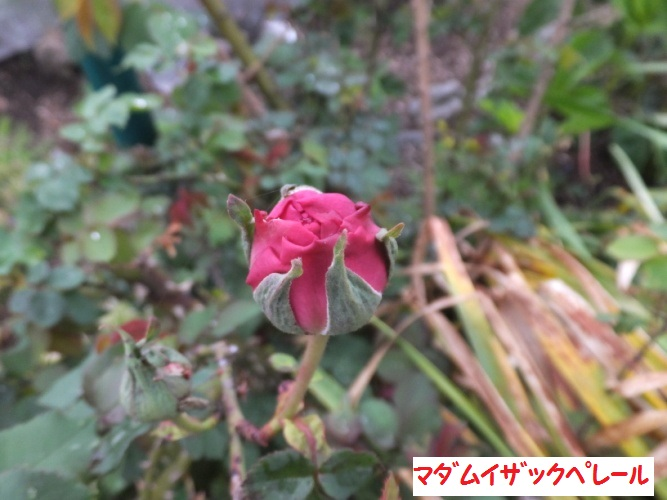 DSCF9317_1.jpg