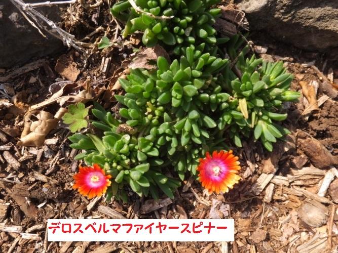 DSCF9462_1_201804131526061db.jpg