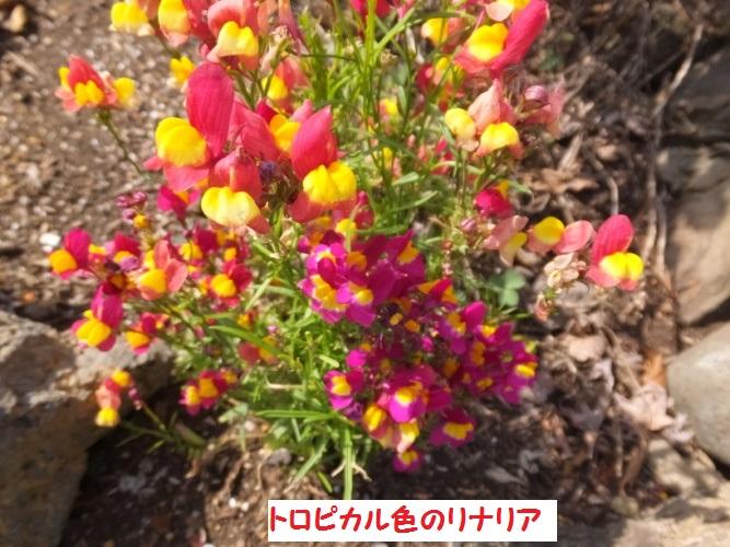 DSCF9464_1_201804131526109b7.jpg