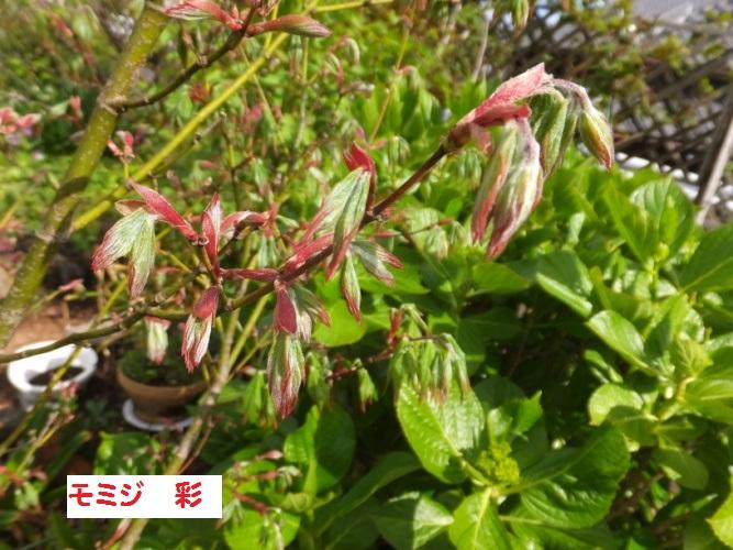 DSCF9578_1.jpg