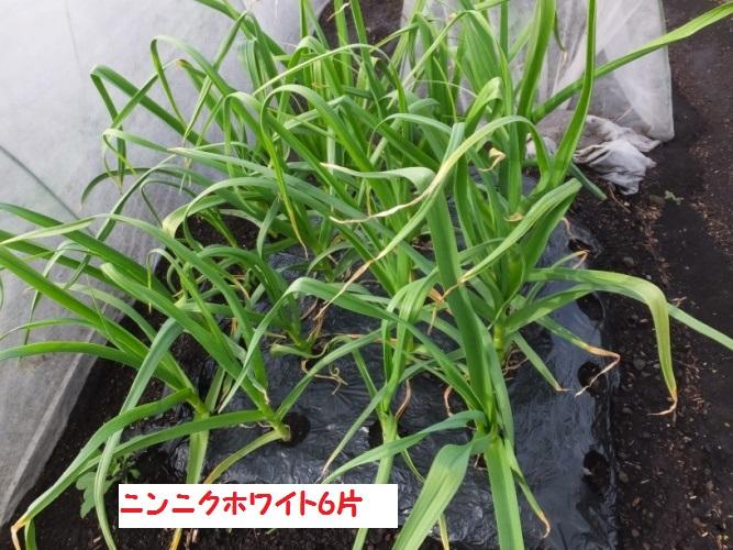 DSCF9619_1.jpg