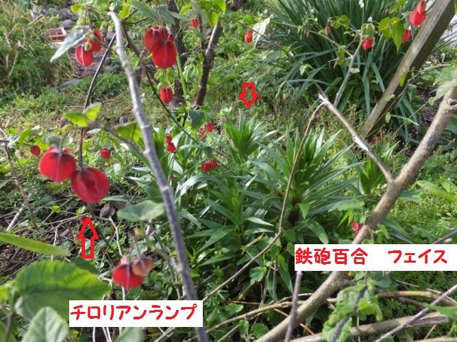 DSCF9628_1.jpg
