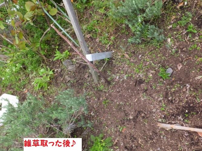 DSCF9646_1.jpg